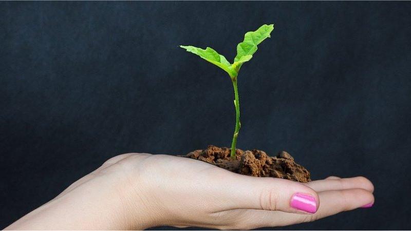 Attivato sul sito ISMEA il portale Imprenditoria femminile