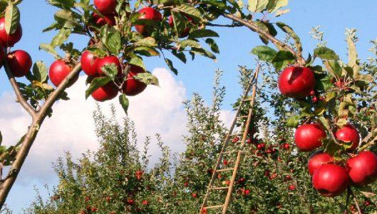 Servizi di consulenza in favore degli agricoltori siciliani