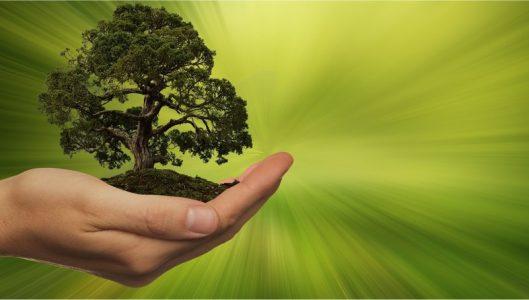 Contributi per attività connesse al settore energia rinnovabile